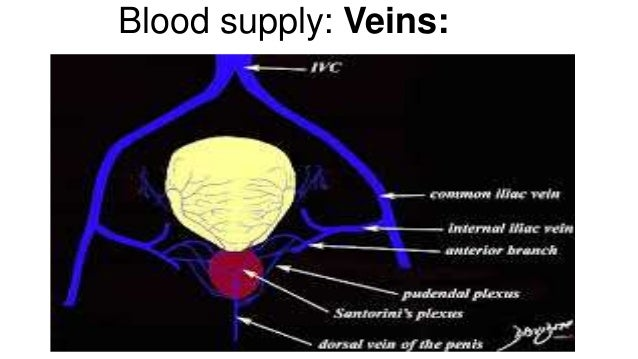 in theory manual lymph drainage leads to a proliferation of